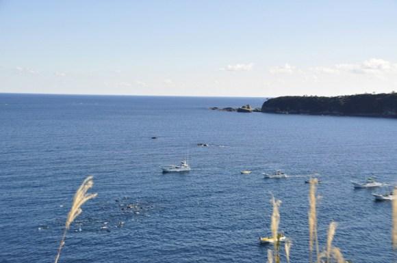 aquarios-japoneses-vao-parar-de-adquirir-golfinhos-de-taiji-barcos-cercando-golfinhos