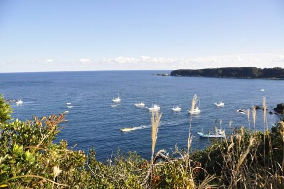aquarios-japoneses-vao-parar-de-adquirir-golfinhos-de-taiji-golfinhos-sendo-encurralados-por-barcos-de-pesca