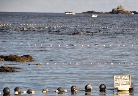 aquarios-japoneses-vao-parar-de-adquirir-golfinhos-de-taiji-placa-de-alerta-censurando-fotos-ativistas