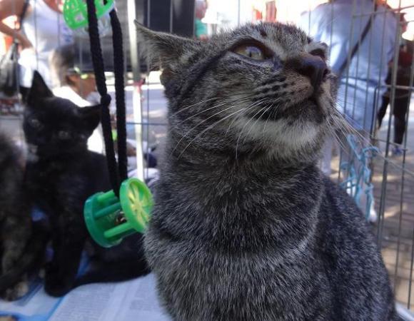 ubatuba-esta-com-castracoes-de-caes-e-gatos-parada-castramovel-prefeitura-gatinho