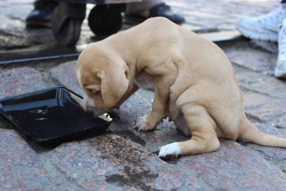 alimentando-cão-ativistas-distribuem-comida-vegetariana-a-moradores-de-rua-em-porto-alegre-vanguarda-abolicionista-expointer