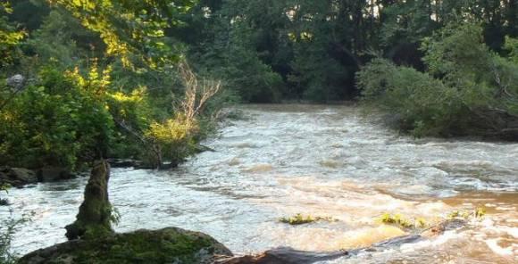 north-carolina-river-contaminacao-de-agua-pela-pecuaria-esta-danificando-peixes