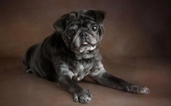 Archie-adote-um-amigo-cães-gatos-adoção-consciente-responsável