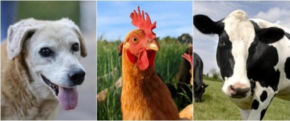 especismo-eletivo-defesa-somente-dos-cães-direitos-animais-anti-especismo-veganismo-abolicionismo-vegano