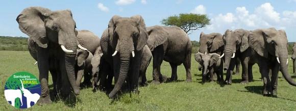 portal-direitos-animais-santuario-elefantes-chapada-dos-guimarães-cuiabá-zoológicos-circos-impacto-ambiental