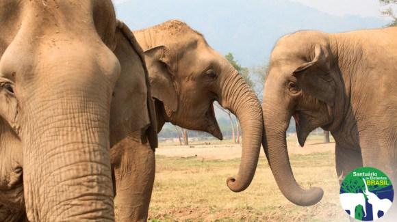 santuario-animais-peso-de-elefante-influencia-menos-do-que-boi-diz-representante-de-santuario