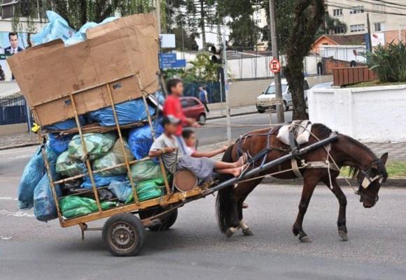 votacao-para-proibicao-das-carrocas-em-taubate-e-nesta-segunda-tração-animal-vereador-douglas-carbonne