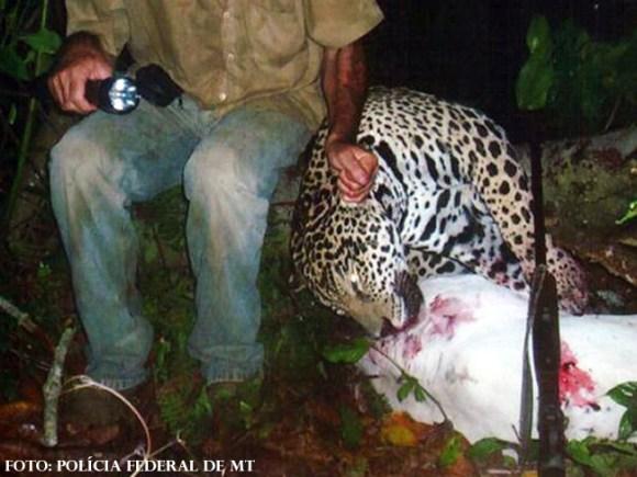 pecuarista-mata-oncas-aluga-fazenda-para-caca-no-mato-grosso-caçador-cowspiracy