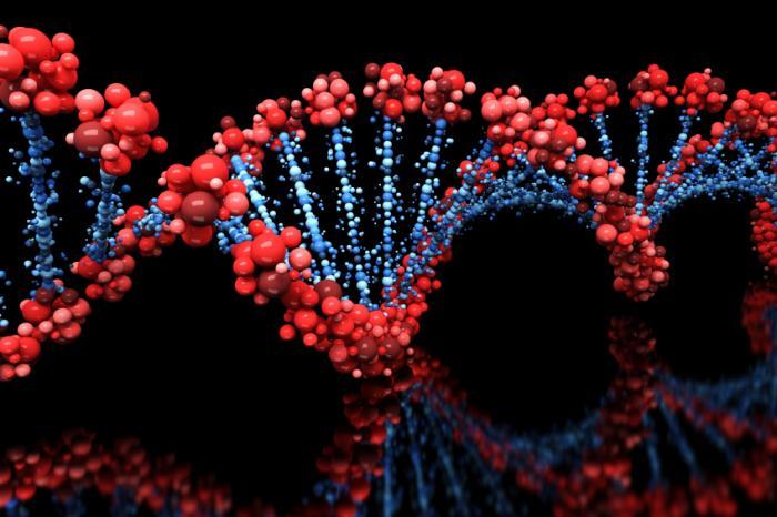 genes A Evolução Humana Existiu (Quer você Acredite ou Não)