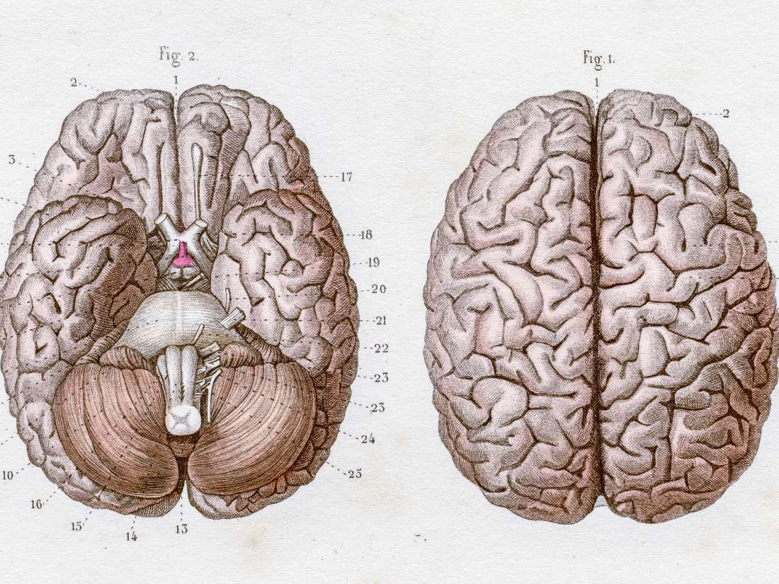 Central Nervous System Structure Function And Diseases