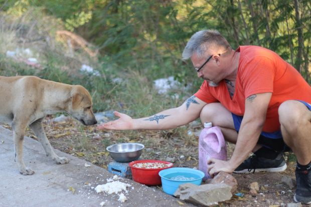 This Man Fell In Love With Thailands Stray Dogs And Now Feeds 80 Every Day dogs