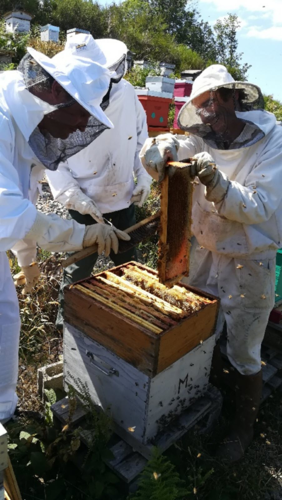 rhone tarare extraction du miel des