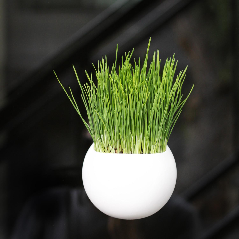 window indoor garden pods Window Pods Indoor Garden // Set of 3 - Windowpods - Touch