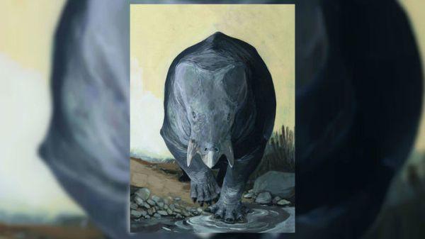 Помесь носорога и черепахи: найдены останки древнего ...