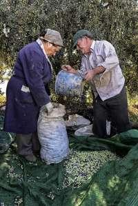 El concurso fotográfico 'Fot-Oleo' premia al ganador con su peso en aceite de oliva virgen extra