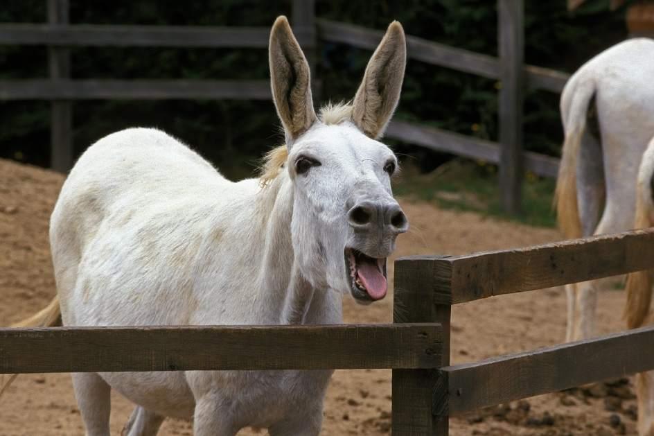 Resultado de imagen para burro condenado