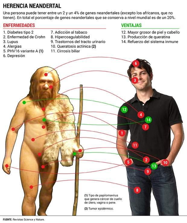 La herencia neandertal en los humanos modernos