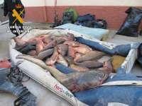 La Guardia Civil interviene 500 kilos de carpas, siluros y lucio percas