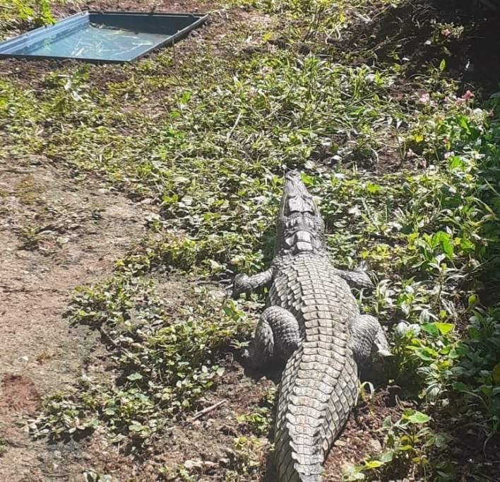 reptile capture
