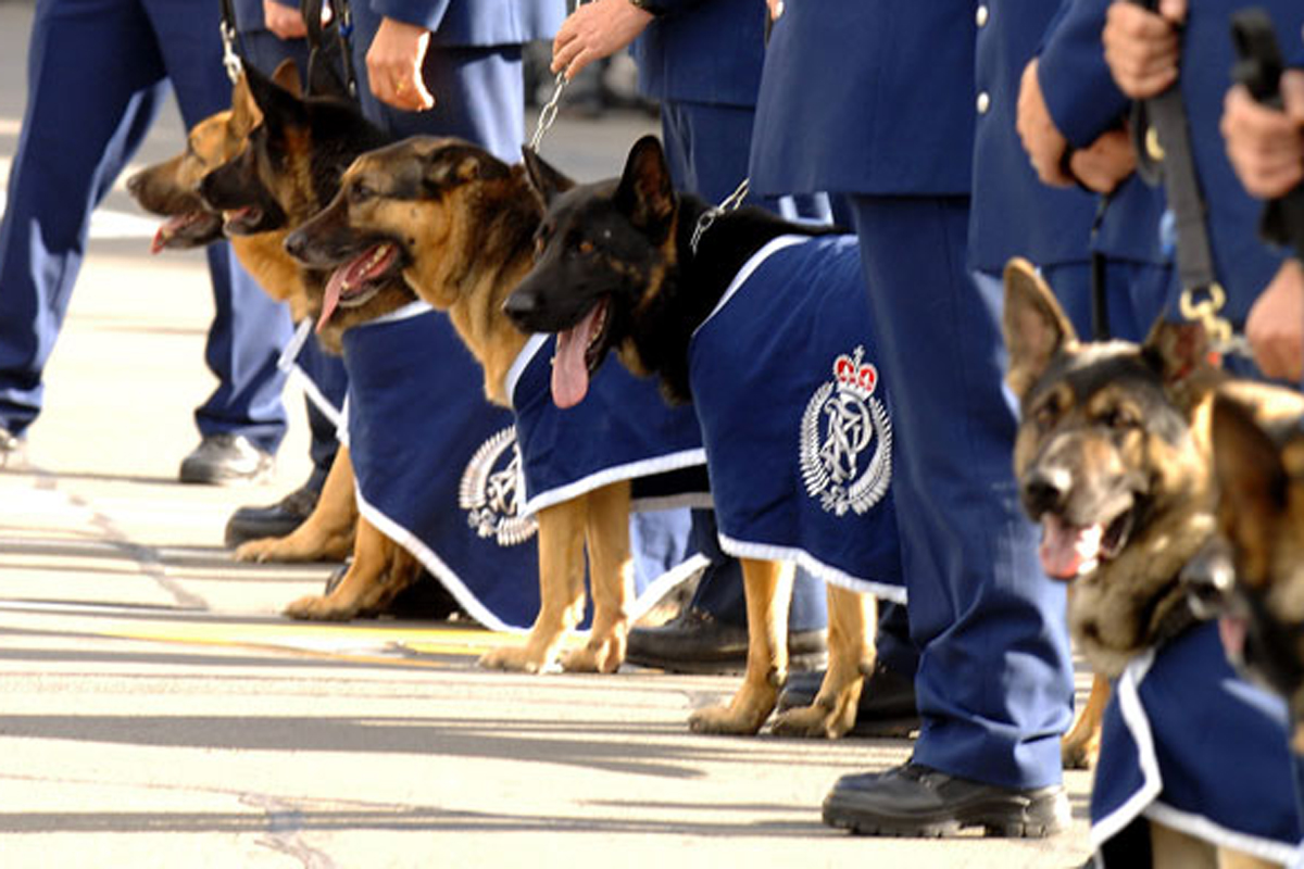 New Zealand police Dog Unit honouring a fallen team member