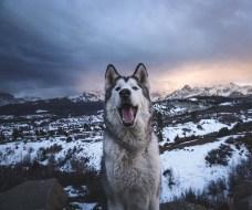 My Adventures with Loki the Wolfdog' Showcases the Dog-Human Bond