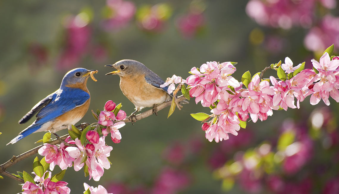 Hearing Loss And Enjoying The Sounds Of Spring