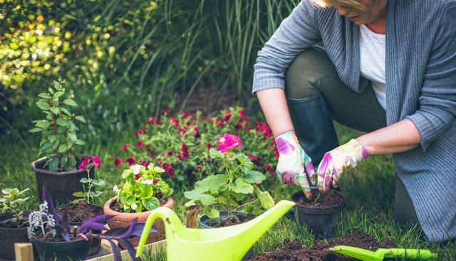 Image result for gardening