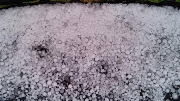 Golf ball-sized hail kills exotic birds at Fort Worth Zoo ...