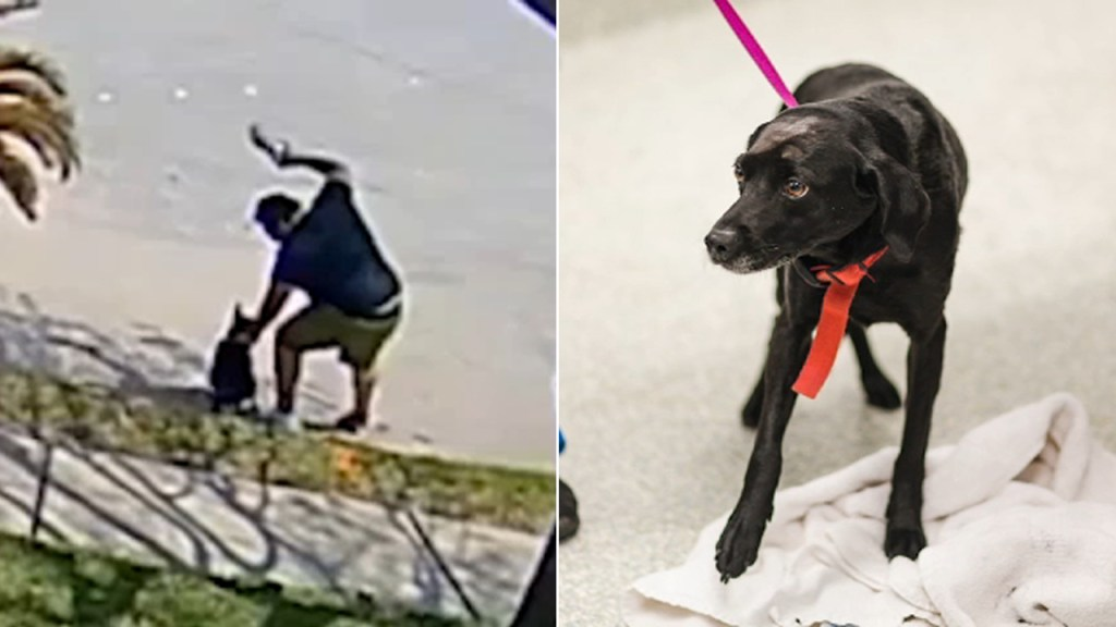 WATCH: Video shows owner violently striking dog more than 20 times