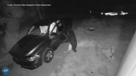 Home security video shows bear opening car door, going inside