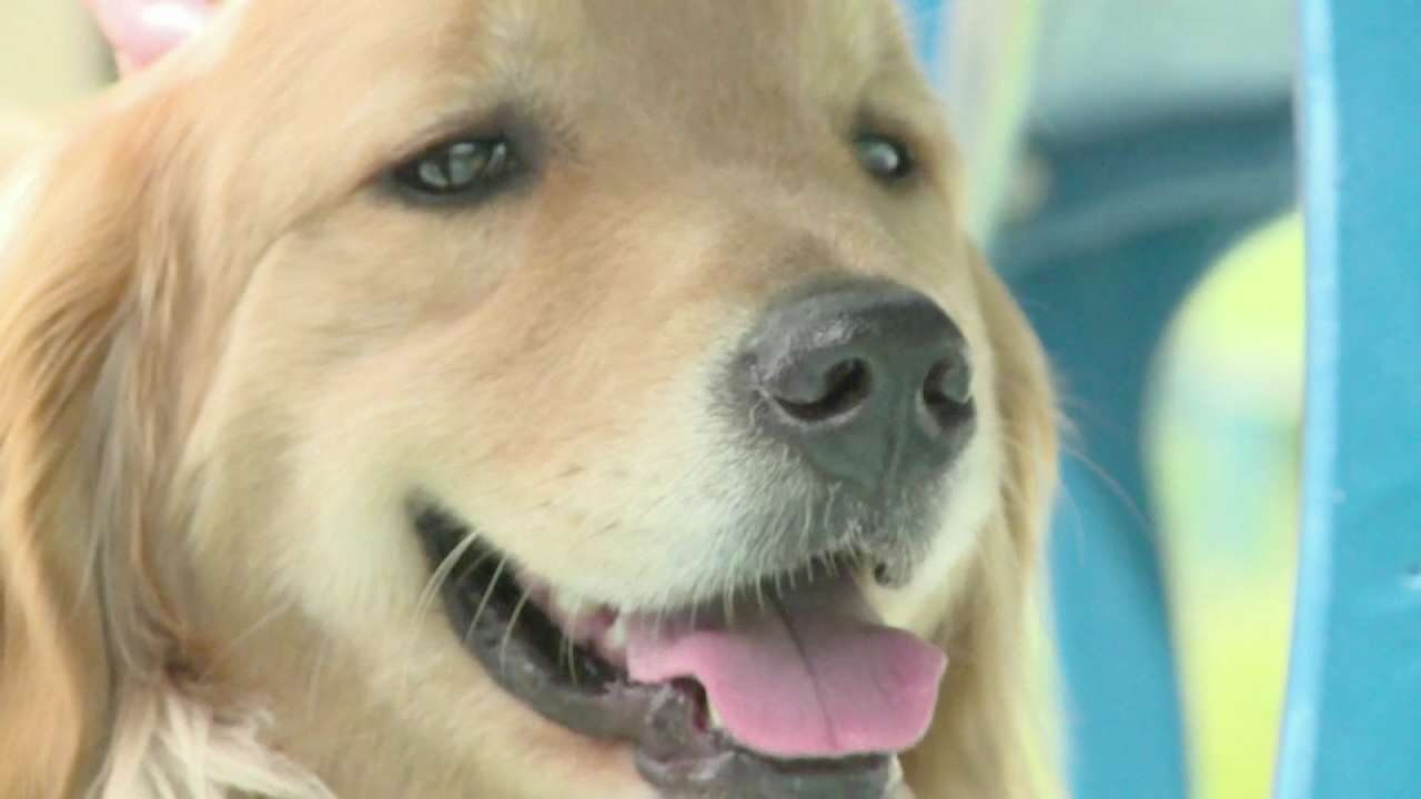 Dog named Kitty honored for life-changing work | abc13.com