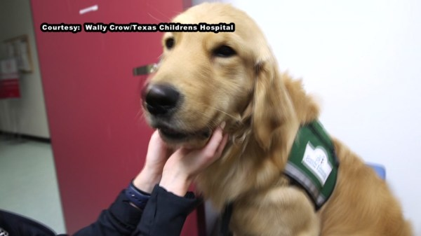 """""""Pinto"""", therapy dog brings smiles to young patients at ..."""