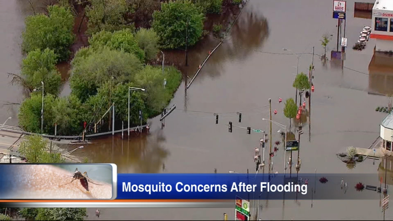 That's a huge part of the allure of a swimming pool. Tips To Keep Mosquitoes Away After Heavy Rain Record Flooding Can You Get Covid 19 From Mosquitoes Abc7 Chicago