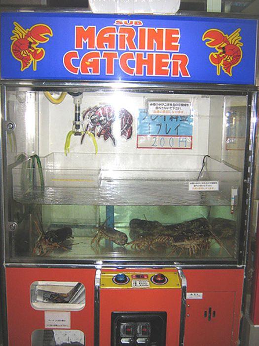 Fresh Food Vending Machines