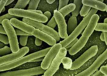 The bacteria in your gut could be responsible for more than just your gut health.