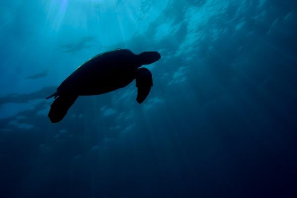 Your Brain on Ocean: Neuroscience and Ocean Exploration ...
