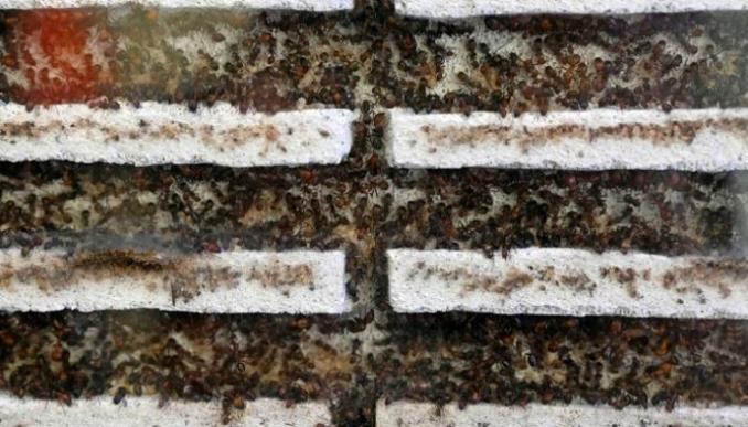متجر في سنغافورة لبيع النمل كحيوانات أليفة