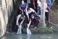 Pemkab Badung tebar ribuan benih ikan lestarikan ekosistem perairan tawar