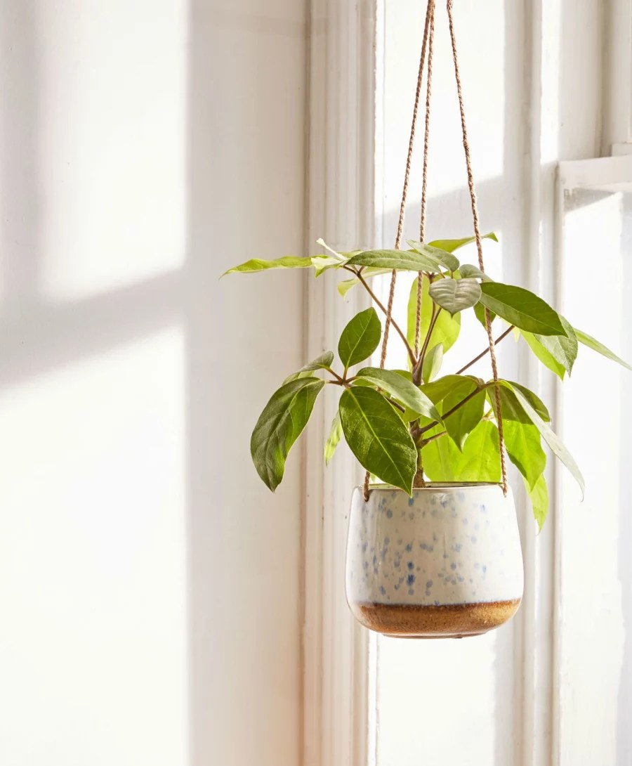 The Best Stylish Indoor Hanging Planters of 2018 ... on Hanging Plant Pots Indoor  id=21091