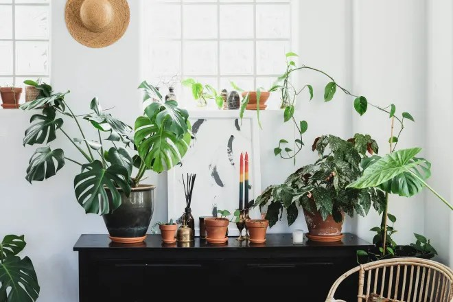 Follow the Rule of Thirds and Keep Your Plants Alive Longer