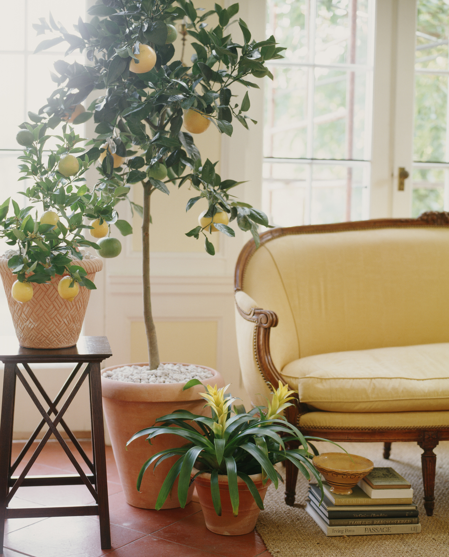 https www apartmenttherapy com lemon tree plant indoors 36756881
