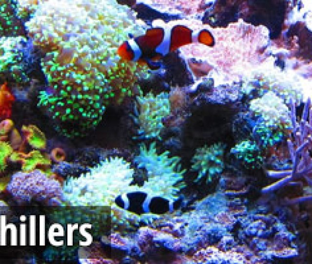 Best Aquarium Chillers 2016