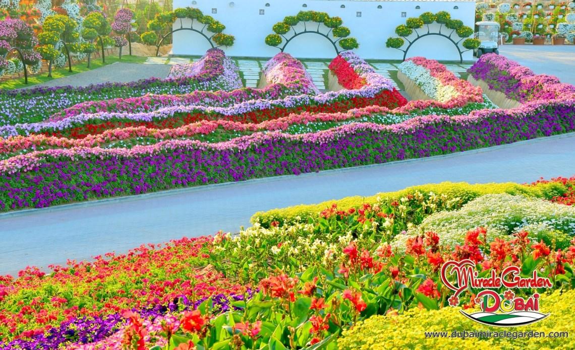 Image Result For Desert Botanical Garden