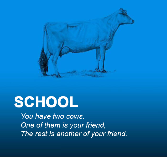 Two Cows Explain Economics Better Than Any Class Architecture Amp Design