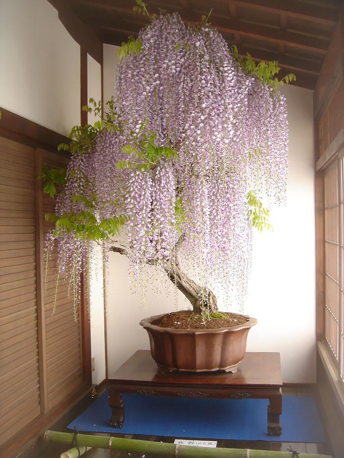 AD-Amazing-Bonsai-Trees-01