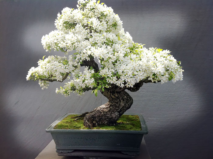 AD-Amazing-Bonsai-Trees-07