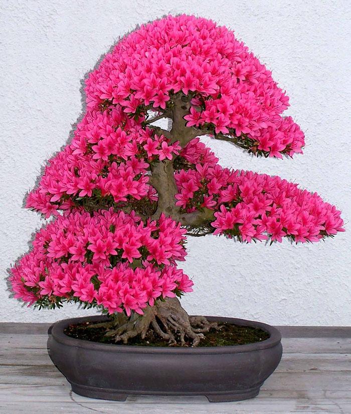 AD-Amazing-Bonsai-Trees-14