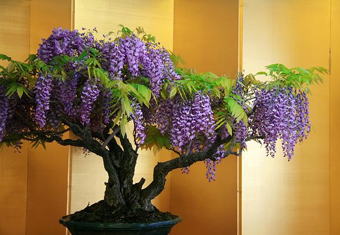 AD-Amazing-Bonsai-Trees-27