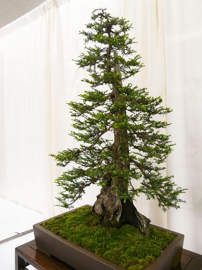 AD-Amazing-Bonsai-Trees-30
