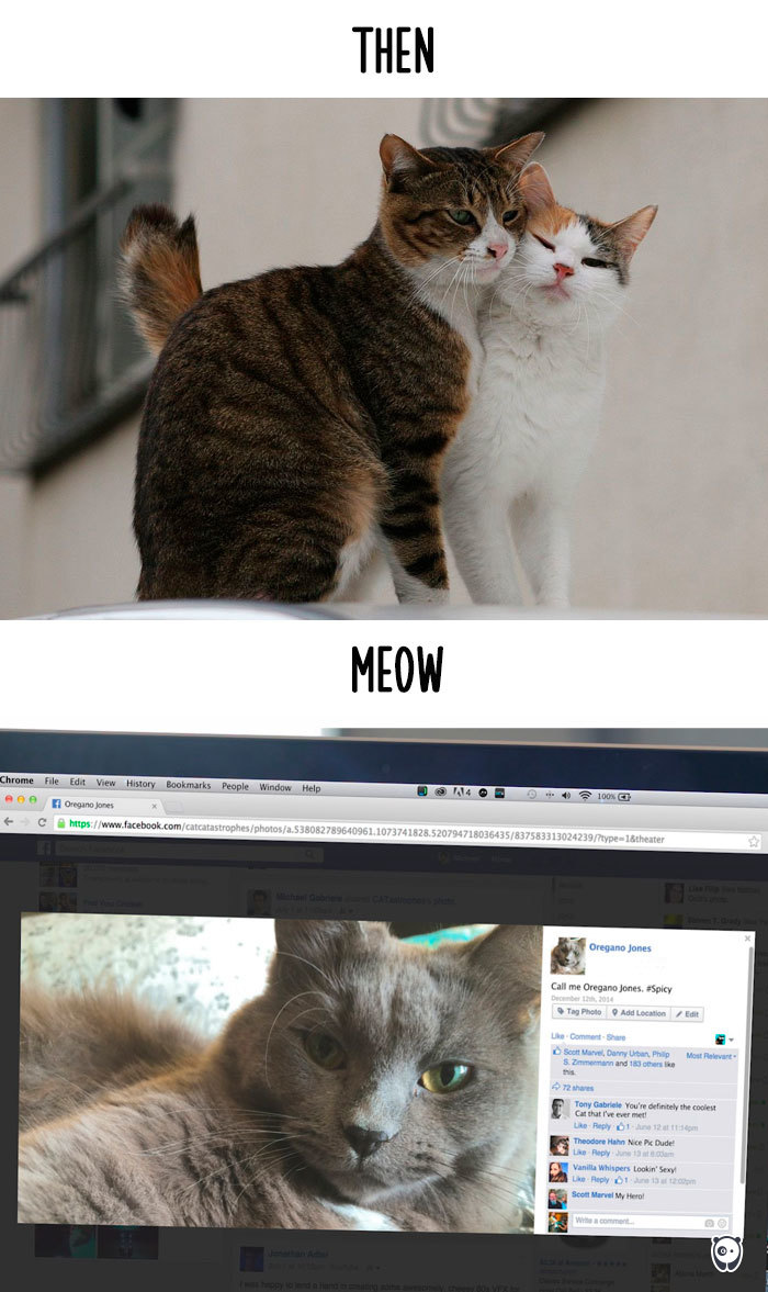 Then Vs Meow How Technology Has Changed Cats Lives 15 Pics